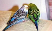 В Израиле мужчина сжёг 80 попугаев, чтобы отомстить арендодателю